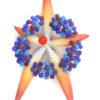 Star Blossom Epiphany